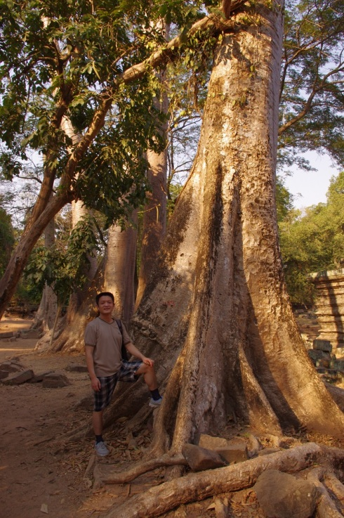 One of the many large trees - with Li in the photo for a sense of scale