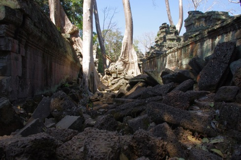 The power of trees to destroy huge sections of the temple
