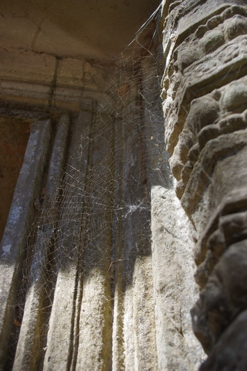 A spider web - amazing against the Ta Prohm backdrop