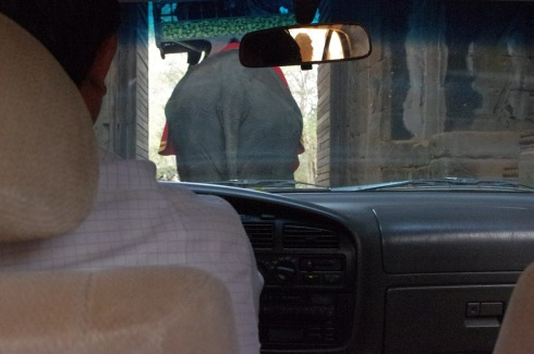 Finally passing through the gate (behind yet another elephant)