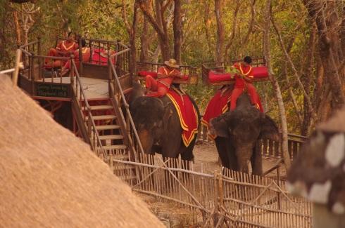 The elephants followed us up!