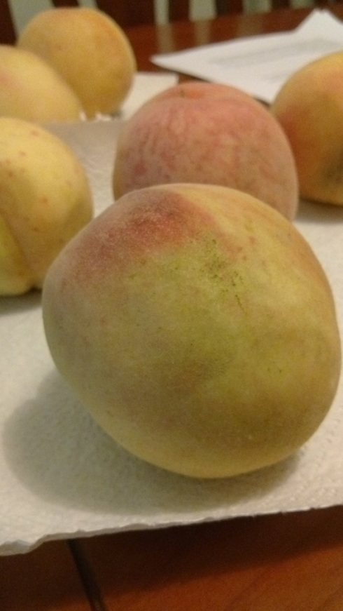 Perfect summer peaches - soon after they were devoured!