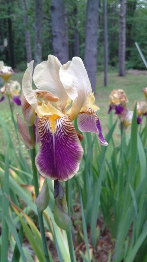 The perfect iris