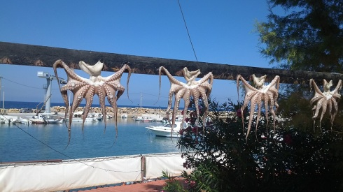 I don't often find octopus hanging on my way - made us smile