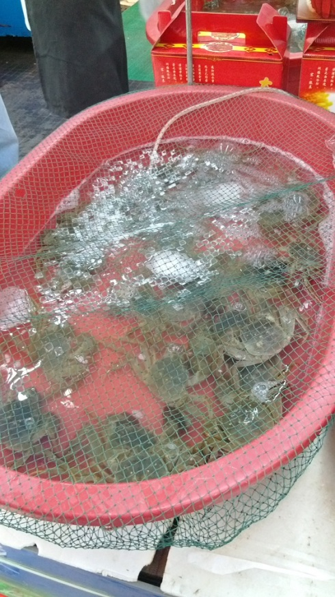 One of the tubs of crabs - yes they are hairy - there is hair on their front claws