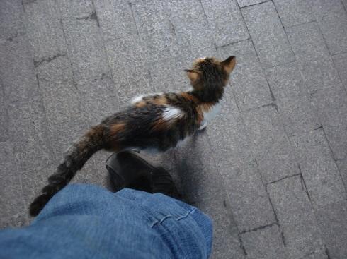 The frisky feline